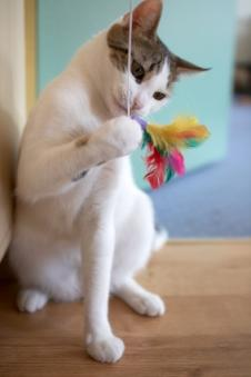 Regular playtime helps pets' minds active and busts boredom. Photo by cats.lovetoknow.com.