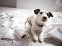Bored pets often can act out, destroying your home.
