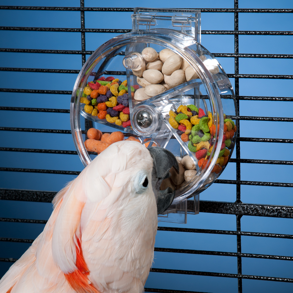 Foraging toys like this one challenge pets to keep boredom at bay. Photo by Drs. Foster and Smith.